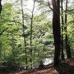 Wo der Barnim am schönsten ist ... Eberswalder Stadtwald südlich vom Schwappachweg