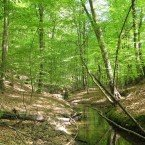 Es geht fast 10 Kilometer auf gewundenen Wegen am Nonnenfließ entlang.