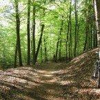 Der Weg führt meist durch frisch ergrünten Buchenwald.