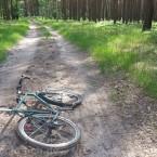 Beim Samithsee im Wald