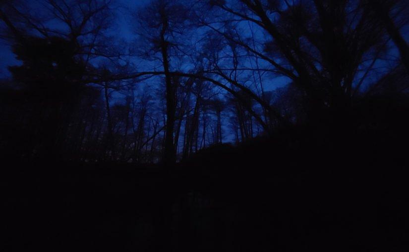 Wer hat den Wald eigentlich so dunkel gemacht?